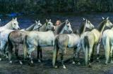 Cavalia's $30M 'Odysseo' Extravaganza Gallops Into National Harbor